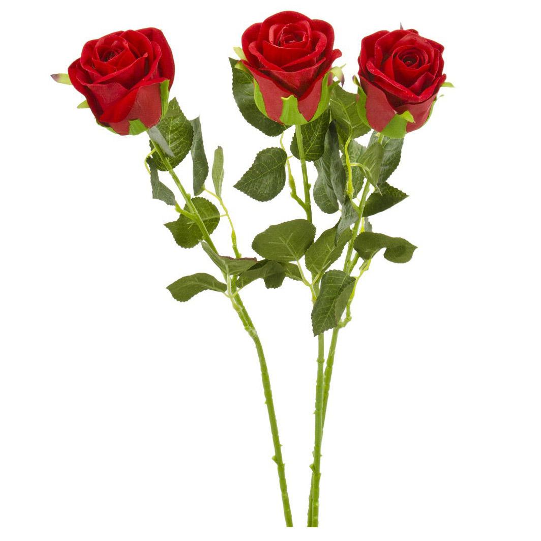 несколько розы фото пять штук художественную
