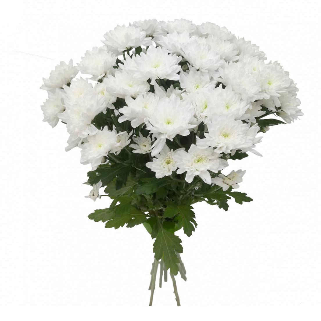 книжка настоящий букет из белых хризантем фото ним